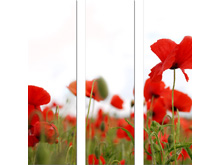 Tríptico decorativo de 120 x 35 cm. (x 3 unidades) - Tríptico compuesto de tres paneles de 120 x 35 cm. cada uno, en total cubrimos una extensión de 120 x 112 cm. según su colocación.